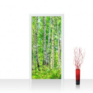 Türtapete - Birch Forest Birkenwald Bäume Wald Sonne Birken Gras Natur Baum | no. 7