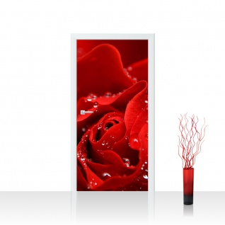 Türtapete - A perfect Rose Blumen Rose Blüten Natur Liebe Love Blüte | no. 24