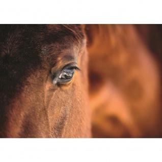 Fototapete Tiere Tapete Pferd Tier Ausschnitt braun | no. 1324