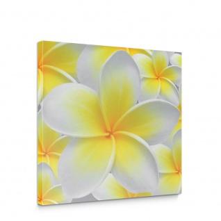 Leinwandbild Blüten Orchidee | no. 274