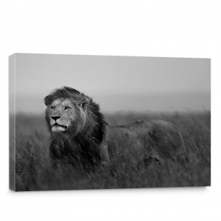 Leinwandbild Löwe Tier Natur Afrika Katze | no. 5060