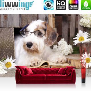 liwwing Vlies Fototapete 312x219cm PREMIUM PLUS Wand Foto Tapete Wand Bild Vliestapete - Tiere Tapete Hund Welpe Terrier Brille Buch bunt - no. 3308
