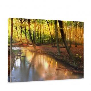 Leinwandbild Wald Bäume Natur Sonne Wasser | no. 252