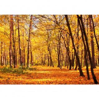 Fototapete Autumn Forest Wald Tapete Herbstblätter Wald Bäume Baum Forest Herbst orange   no. 84