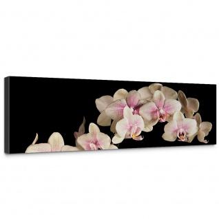 Leinwandbild Creamy Orchid Orchidee Blumen Blumenranke Rosa Pink Natur Pflanzen | no. 104