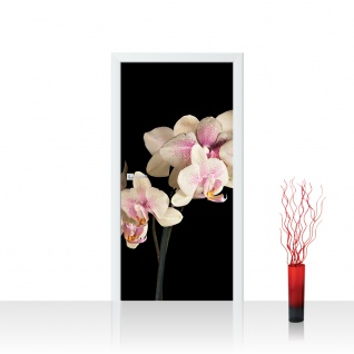 Türtapete - Creamy Orchid Orchidee Blumen Blumenranke Rosa Pink Natur Pflanzen | no. 104