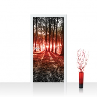 Türtapete - Sonnenuntergang Wald Bäume Wiese | no. 640