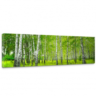 Leinwandbild Sunny Birch Forest Birkenwald Bäume Wald Sonne Birke Gras Natur Baum | no. 112