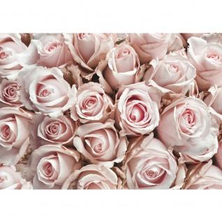 Fototapete Blumen Tapete Blumen Rose Blüten Natur Liebe Love Blüte Weiß rosa | no. 189