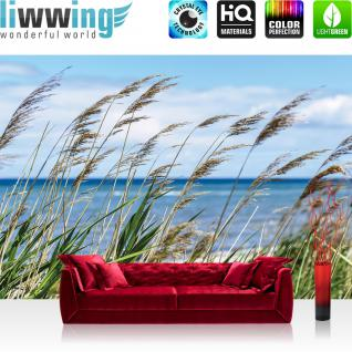 liwwing Vlies Fototapete 312x219cm PREMIUM PLUS Wand Foto Tapete Wand Bild Vliestapete - Landschaft Tapete Meer Strand Schilf Pflanzen Himmel blau - no. 2201