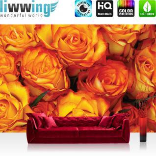 liwwing Vlies Fototapete 350x245 cm PREMIUM PLUS Wand Foto Tapete Wand Bild Vliestapete - Blumen Tapete Rose Blumen Blüte Liebe Rosen orange - no. 984