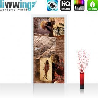 liwwing Vlies Türtapete 91x211 cm PREMIUM PLUS Tür Fototapete Türposter Türpanel Foto Tapete Bild - Muscheln Abstrakt - no. 282