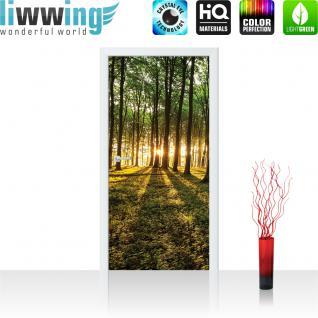 liwwing Vlies Türtapete 91x211 cm PREMIUM PLUS Tür Fototapete Türposter Türpanel Foto Tapete Bild - Wald Bäume Sonne Schatten - no. 928