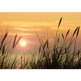 Fototapete Pflanzen Tapete Sonnenaufgang Sonne Feld Romantisch grün | no. 206