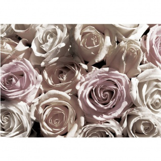 Fototapete Blumen Tapete Rose Blume Blüte Blätter Liebe sepia | no. 2463