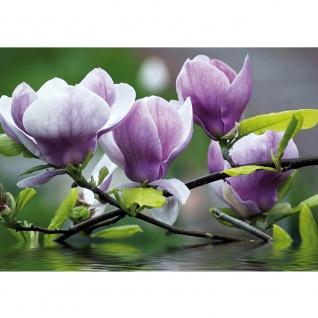 Fototapete Orchideen Tapete Blume Wasser Pflanze Orchidee lila | no. 439