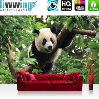 liwwing Vlies Fototapete 350x245 cm PREMIUM PLUS Wand Foto Tapete Wand Bild Vliestapete - Tiere Tapete Tier Panda Bär Baum Fell Kinderzimmer Zoo Dschungel grün - no. 986