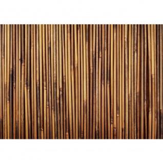 Fototapete Bambus Tapete Bambus gold gelb beige Wald Bambuswald Dschungel Garten Natur tropisch Bäume orange | no. 173