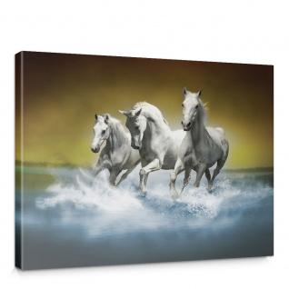 Leinwandbild Pferd Wasser Schimmel Rennpferd | no. 1014