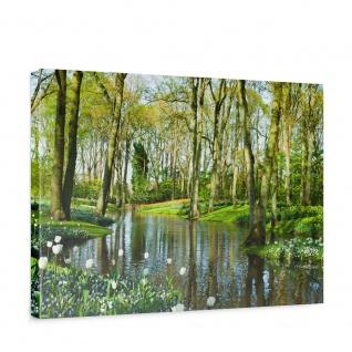 Leinwandbild Wald Bäume Natur Frühling Wasser Sonne | no. 256
