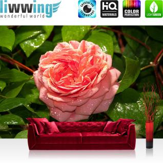 liwwing Vlies Fototapete 312x219cm PREMIUM PLUS Wand Foto Tapete Wand Bild Vliestapete - Blumen Tapete Blüten Blätter Rose Wassertropfen grün - no. 2884
