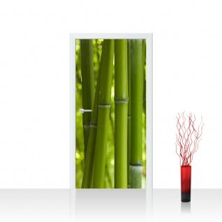 Türtapete - Dream of Bamboo Bambus Wald Jungle Dschungel Natur Baum Gras | no. 71