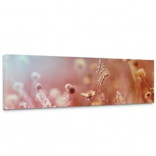 Leinwandbild Blumen Blüten Natur Rosa Wiese | no. 198