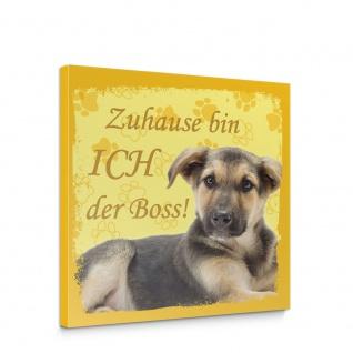 Leinwandbild Schäferhund Haustiere Hunde Tiere   no. 5488