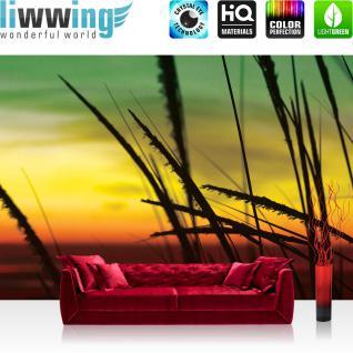 liwwing Vlies Fototapete 312x219cm PREMIUM PLUS Wand Foto Tapete Wand Bild Vliestapete - Pflanzen Tapete Sonnenuntergang Gräser Natur Romantik gelb - no. 1446