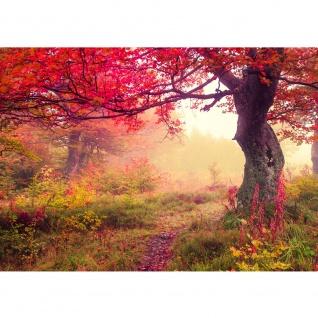 Fototapete Wald Tapete Wald Bäume Herbst Natur Sonne beige | no. 258