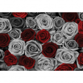 Fototapete Blumen Tapete Rosen Blume Blüte Pflanze Liebe grau | no. 2409