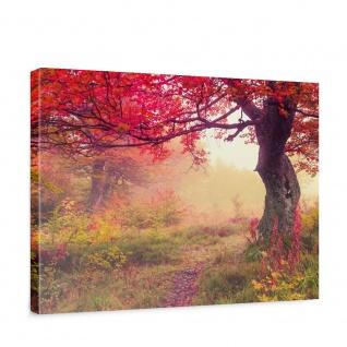 Leinwandbild Wald Bäume Herbst Natur Sonne | no. 258