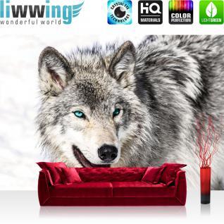 liwwing Vlies Fototapete 312x219cm PREMIUM PLUS Wand Foto Tapete Wand Bild Vliestapete - Tiere Tapete Husky Hund Winter Schnee grau - no. 1518