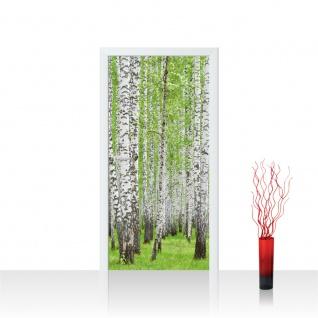 Türtapete - Birke Wald Bäume | no. 433
