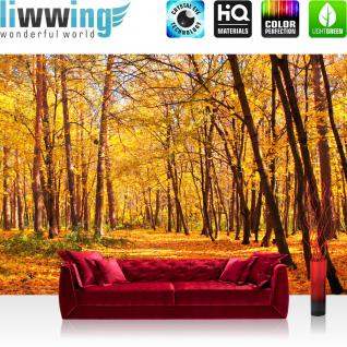 liwwing Vlies Fototapete 200x140 cm PREMIUM PLUS Wand Foto Tapete Wand Bild Vliestapete - AUTUMN FOREST - Natur Herbstblätter Wald Bäume Baum Forest Herbst - no. 084