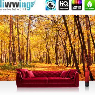 liwwing Vlies Fototapete 300x210 cm PREMIUM PLUS Wand Foto Tapete Wand Bild Vliestapete - AUTUMN FOREST - Natur Herbstblätter Wald Bäume Baum Forest Herbst - no. 084