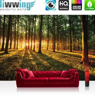 liwwing Vlies Fototapete 350x245 cm PREMIUM PLUS Wand Foto Tapete Wand Bild Vliestapete - Wald Tapete Sonnenuntergang Wald Bäume Wiese gelb - no. 639