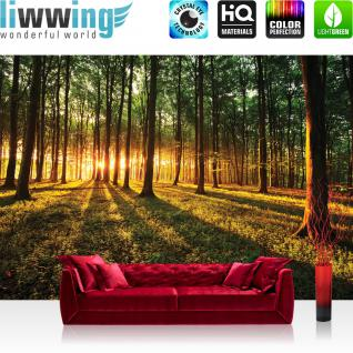 liwwing Vlies Fototapete 400x280 cm PREMIUM PLUS Wand Foto Tapete Wand Bild Vliestapete - Wald Tapete Sonnenuntergang Wald Bäume Wiese gelb - no. 639