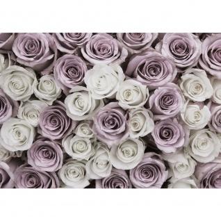 Fototapete Blumen Tapete Rose Blume Blüte Pflanze Liebe weiß | no. 2369