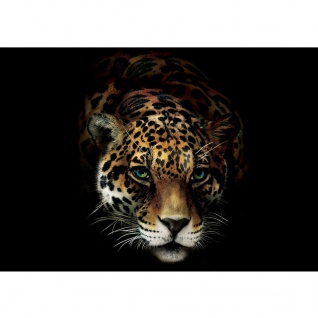 Fototapete Tiere Tapete Jaguar, Leopard, Raubkatze bunt | no. 3257