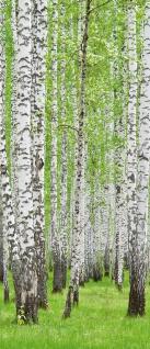 Türtapete - Birke Wald Bäume | no. 433 - Vorschau 5