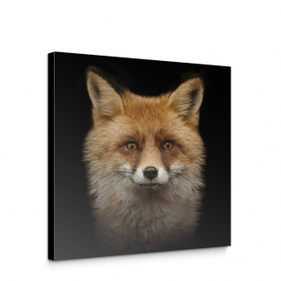 Leinwandbild Tiere Fuchs Wild Blick Gesicht Natur   no. 5679