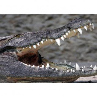 Fototapete Tiere Tapete Krokodil Tier Raubtier Zähne Gebiss grau | no. 2055