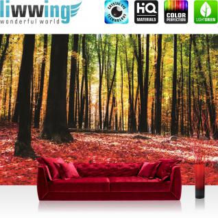 liwwing Vlies Fototapete 152.5x104cm PREMIUM PLUS Wand Foto Tapete Wand Bild Vliestapete - Wald Tapete Bäume Laub Herbst Steine Sonne Schatten rot - no. 1968