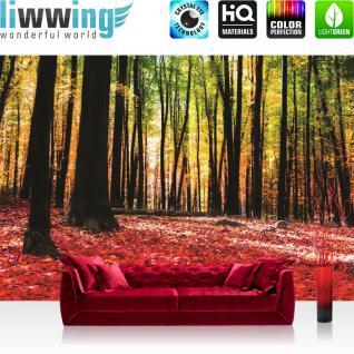 liwwing Vlies Fototapete 416x254cm PREMIUM PLUS Wand Foto Tapete Wand Bild Vliestapete - Wald Tapete Bäume Laub Herbst Steine Sonne Schatten rot - no. 1968