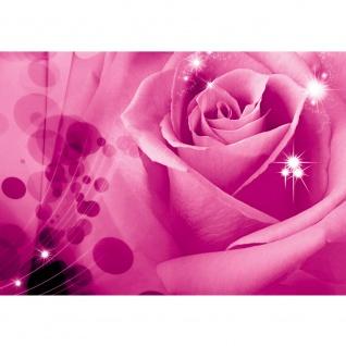 Fototapete Blumen Tapete Rose Blume Blüte Blätter Liebe Sterne pink | no. 2442