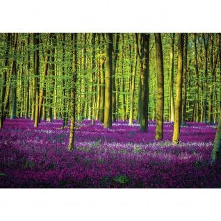 Fototapete Wald Tapete Bäume Natur Pflanzen Blumen lila | no. 1597