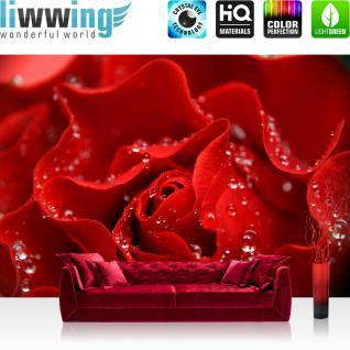 liwwing Vlies Fototapete 350x245 cm PREMIUM PLUS Wand Foto Tapete Wand Bild Vliestapete - A PERFECT ROSE - Blumen Rose Blüten Natur Liebe Love Blüte - no. 024