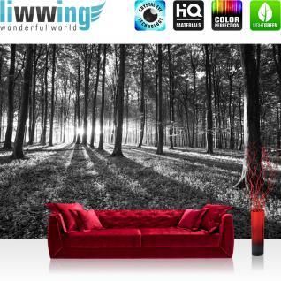 liwwing Vlies Fototapete 300x210 cm PREMIUM PLUS Wand Foto Tapete Wand Bild Vliestapete - Wald Tapete Sonnenuntergang Wald Bäume Wiese grau - no. 642