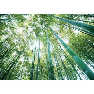 Fototapete Wald Tapete Wald Bäume Himmel Bambus Natur grün grün | no. 410